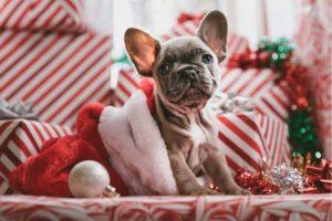 Christmas dog workout